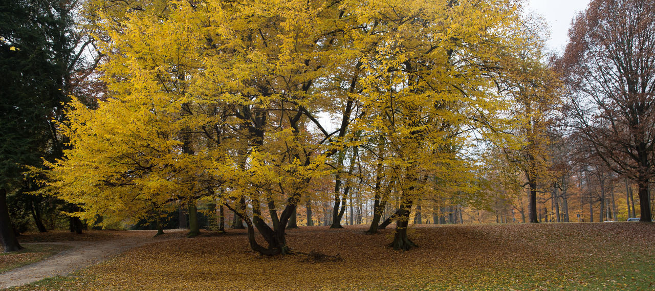 Autumn landscape in Europe Autumn Landscape Background Beautiful Nature Beauty In Nature Bush Cold Colors Dark Depth Of Field Forest Germany Görlitz Mood Open Space Outdoors Park Quiet Moments Serene Serene Outdoors Serenity Trees Walking In Park Yellow Leaves