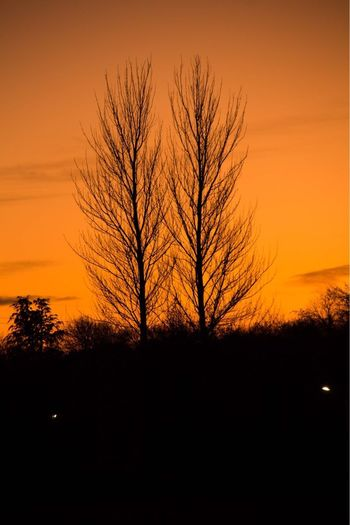 Sunset Tree Bare Tree Silhouette Beauty In Nature Tranquil Scene Tranquility