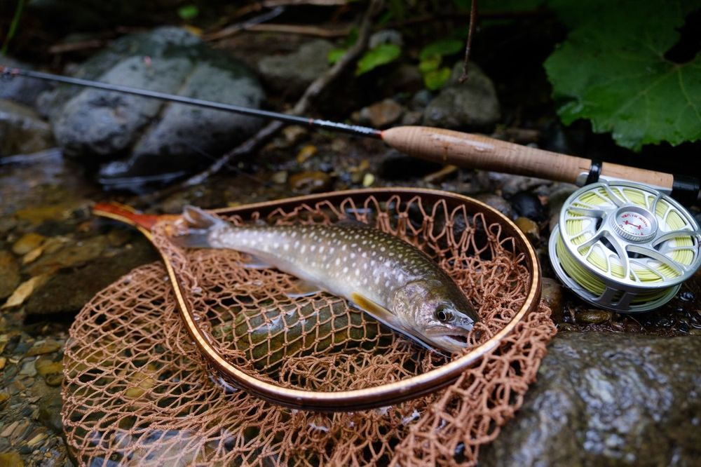 Nature Photography Nature_collection Nature Troutfishing Trout Flyfishingnation Flyfishing  Iwana Fujixpro2 Fujifilm_xseries Fujifilm X-PRO2