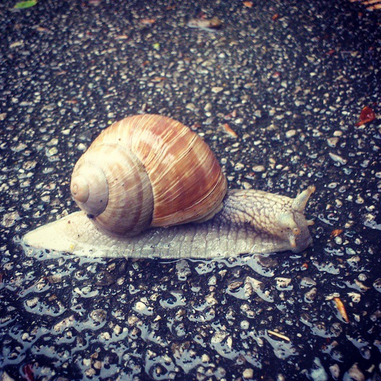 snail, one animal, animal themes, animal shell, gastropod, wildlife, animals in the wild, outdoors, day, nature, no people, animal wildlife, close-up, fragility