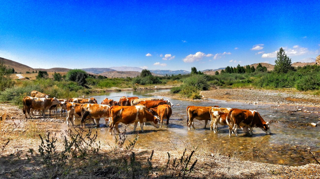 Internal Cow Stream Photography Photo EyeEm Gallery 🐄🐮🐄🐮