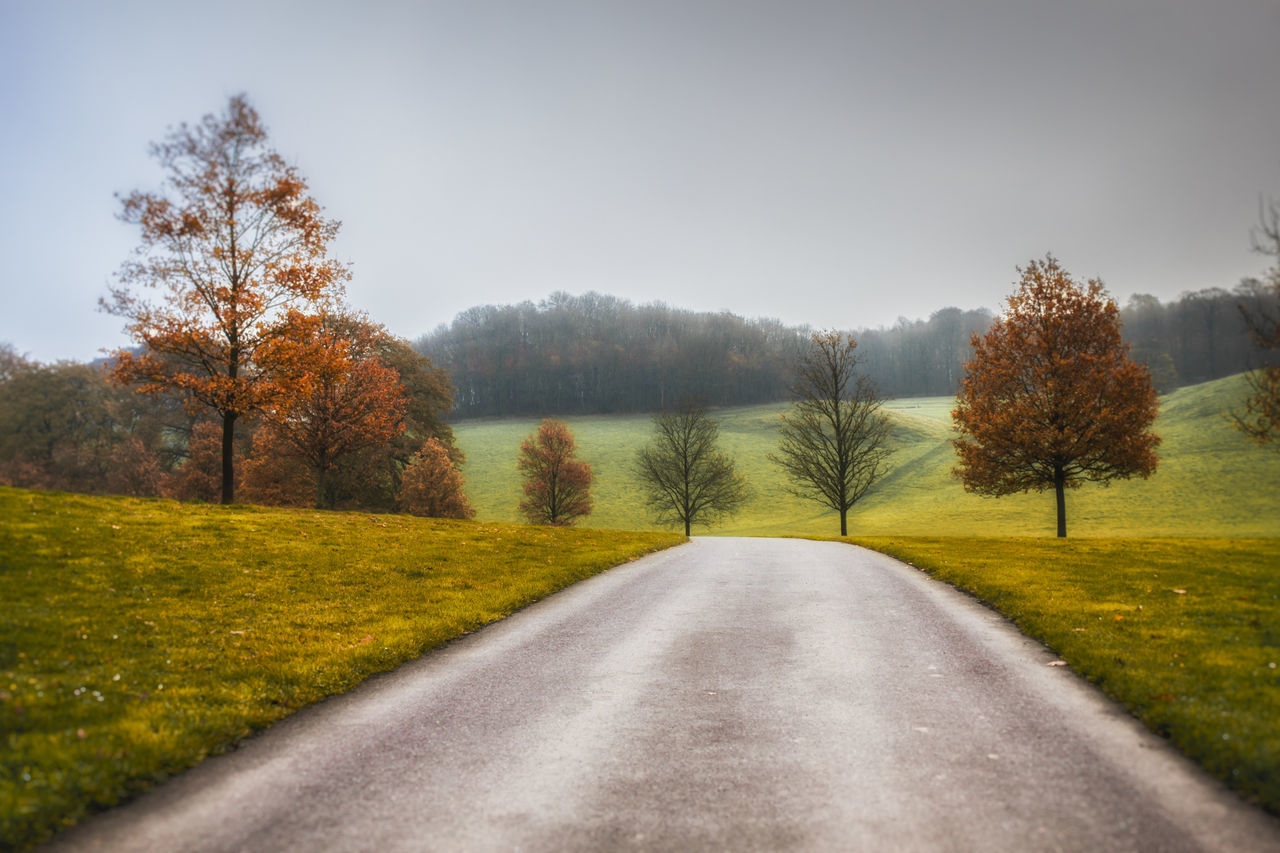tree, the way forward, tranquil scene, road, nature, tranquility, scenics, beauty in nature, autumn, no people, day, landscape, change, transportation, outdoors, grass, clear sky, sky