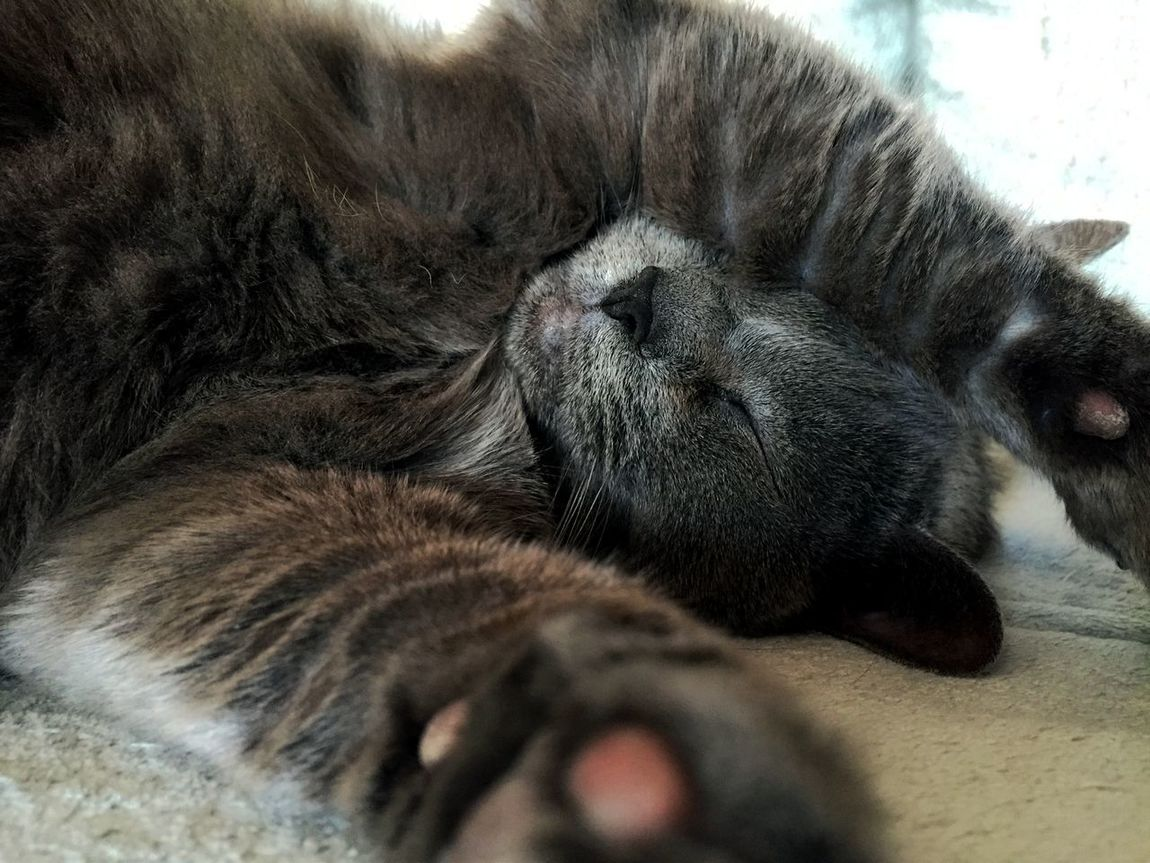 Sleepy cat.. Animal Themes Domestic Animals Domestic Cat Feline Indoors  Lying Down Mammal No People Pets Relaxation Sleeping