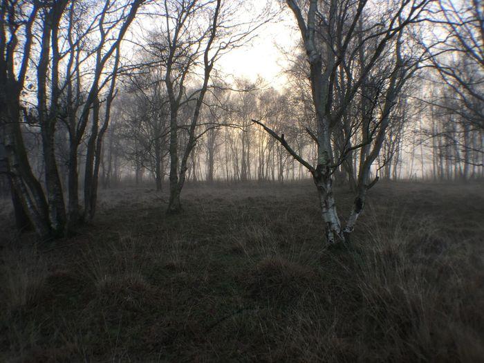 Nature Walking No Filter