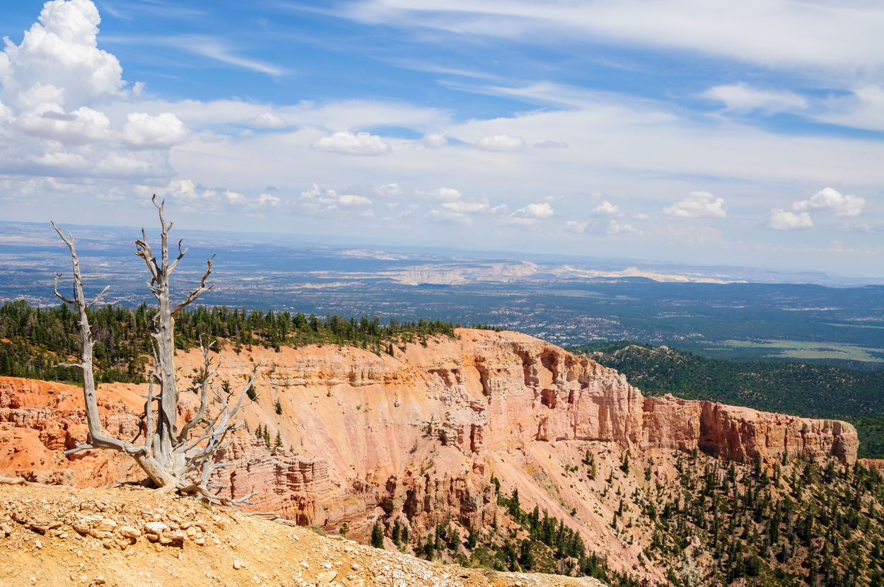 Arid Climate Beauty In Nature Bryce Canyon National Park Cliff Cloud - Sky Cloudy Countryside Day Dramatic Landscape Geology Landscape Mountain Nature No People Non-urban Scene Outdoors Physical Geography Remote Rock Formation Rocky Scenics Solitude Tranquility Tree Utah