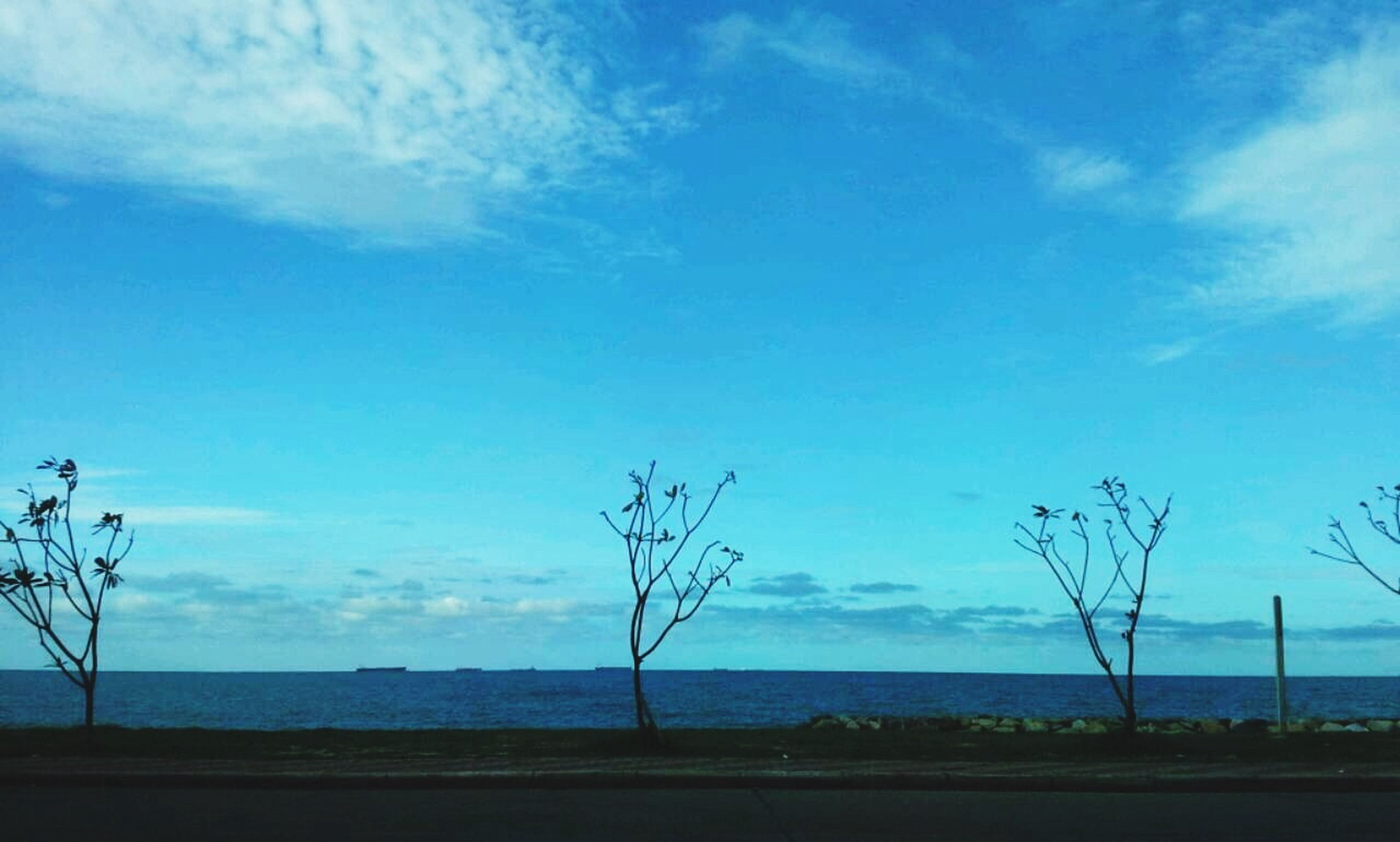 tranquility, sky, tranquil scene, scenics, bare tree, blue, tree, horizon over water, sea, beauty in nature, nature, water, landscape, beach, cloud, branch, shore, field, cloud - sky, idyllic