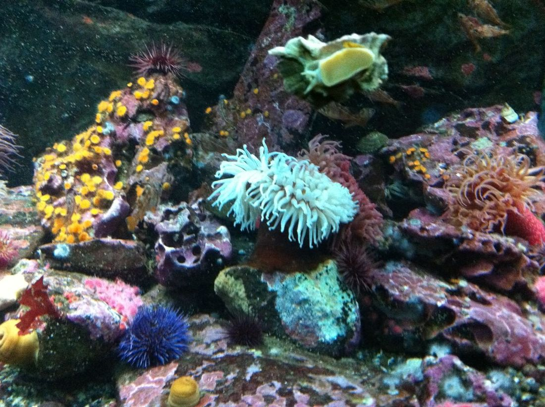 Aquarium Aquarium Life Aquarium Photography Beauty In Nature Coral Day Flower Flower Head Fragility Freshness Garden Growth In Bloom Multi Colored Nature No People Outdoors Petal Plant Rock Sea Seattle Aquarium Thorn Tranquility