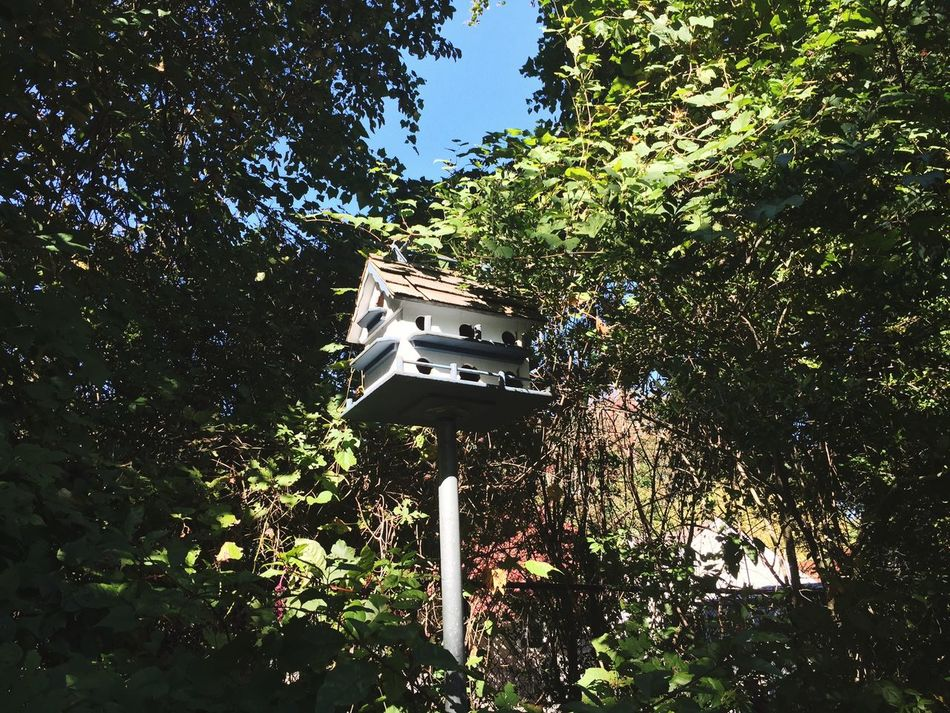 Where birds once lived | Nature Birds House Blue Sky Weather Green Leaves Check This Out