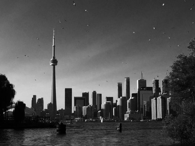 City Architecture Urban Skyline Cityscape CN Tower - Toronto Harbour Front Toronto Centre Island Check This Out Blackandwhite Blackandwhite Photography Seagull
