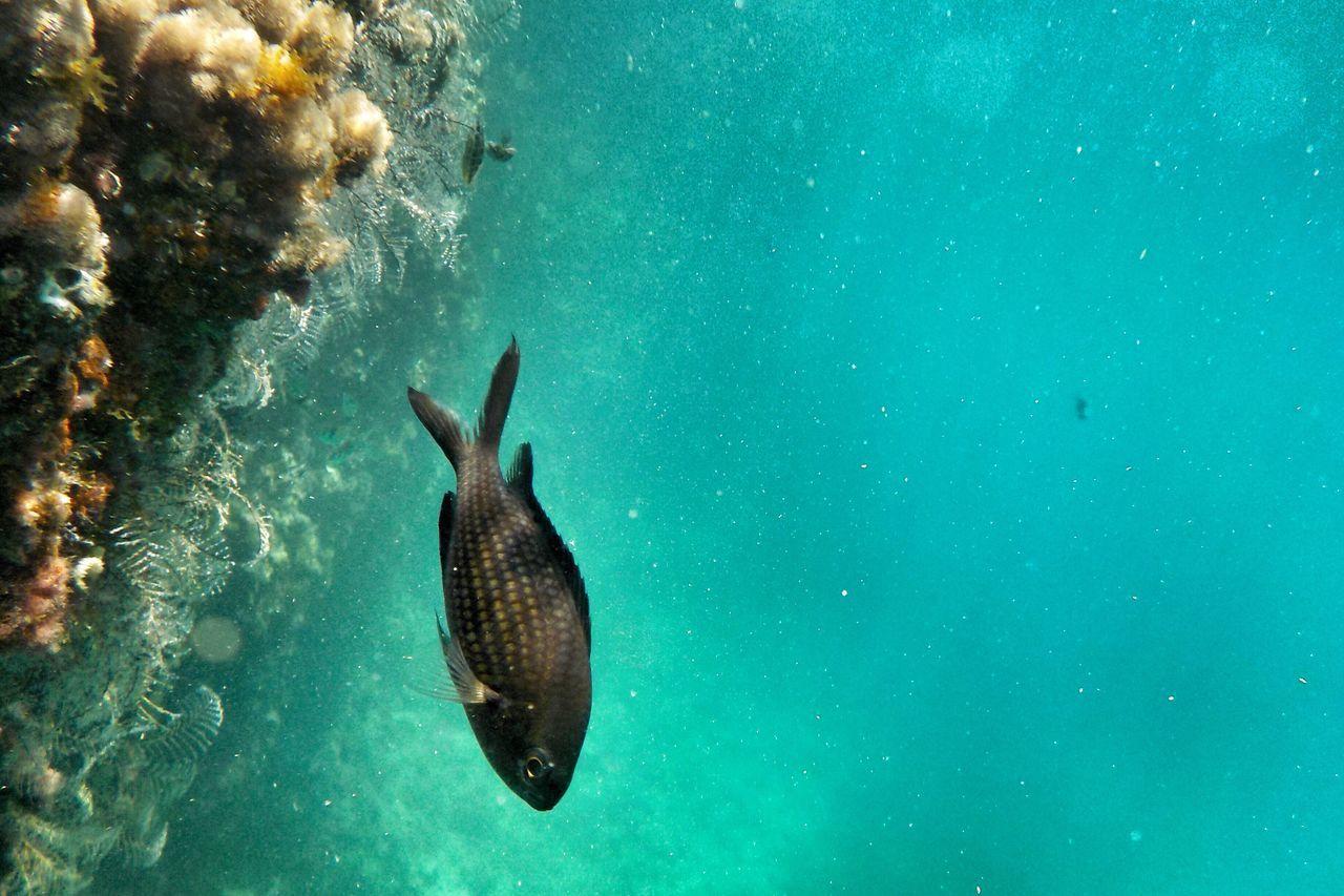 Jellyfish Swimming In Water