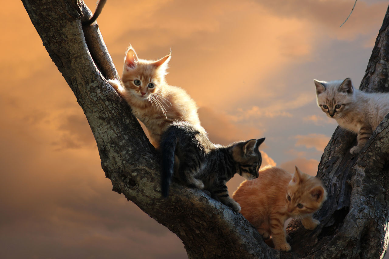 Low Angle View Of Kittens On Tree Against Cloudy Sky During Sunset