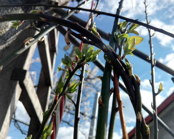 Outdoors Low Angle View No People Nature Tree Sky Close-up Branches Ladder Branches And Sky Huaweiphotography On Market Edited By @wolfzuachis Showcase: 2017 Wolfzuachiv Eyeem Market Showcase: March @WOLFZUACHiV Veronica Ionita Wolfzuachis EyeEmNewHere Sunlight Day