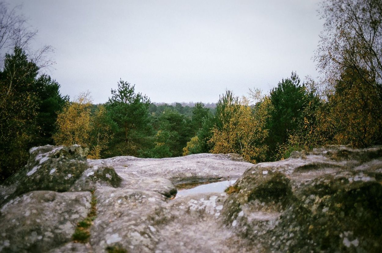 Film Photography Argentique Filmphotography France Filmisnotdead Olympus OM-1 Green Nature Wood Forest Fontainebleau Foret De Fontainebleau Paris Quiet Places Panorama Color
