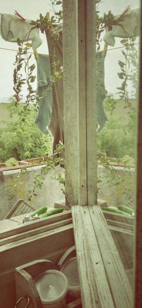 growth, plant, window, no people, potted plant, day, indoors, leaf, close-up, nature, tree, freshness, food, greenhouse