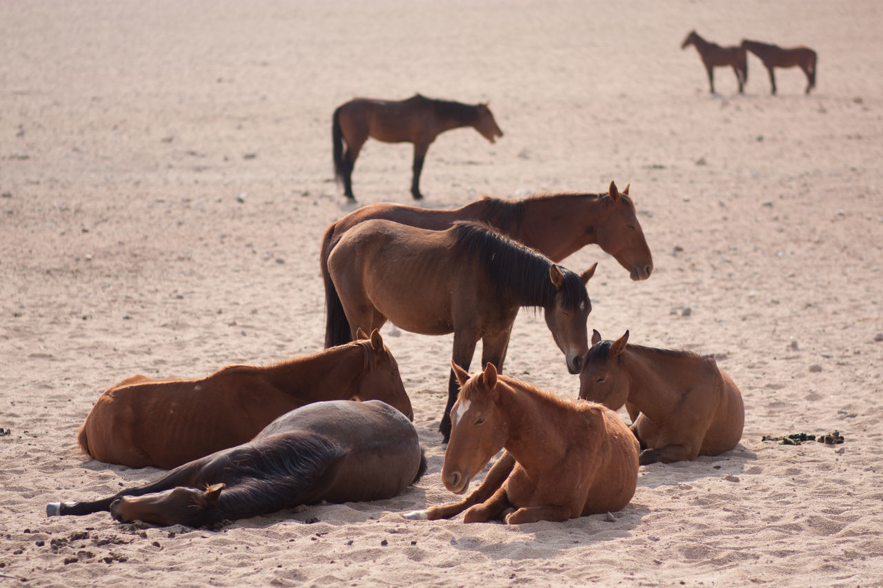 Beautiful stock photos of desert, Animal, Animal Themes, Day, Desert
