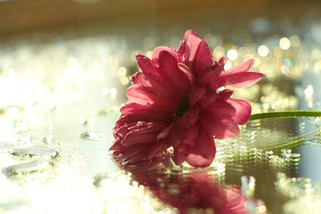 Flower Spring Flowers Bokeh Macro Macro_collection Macroclique EyeEm Best Shots Light And Shadow Popular Photos
