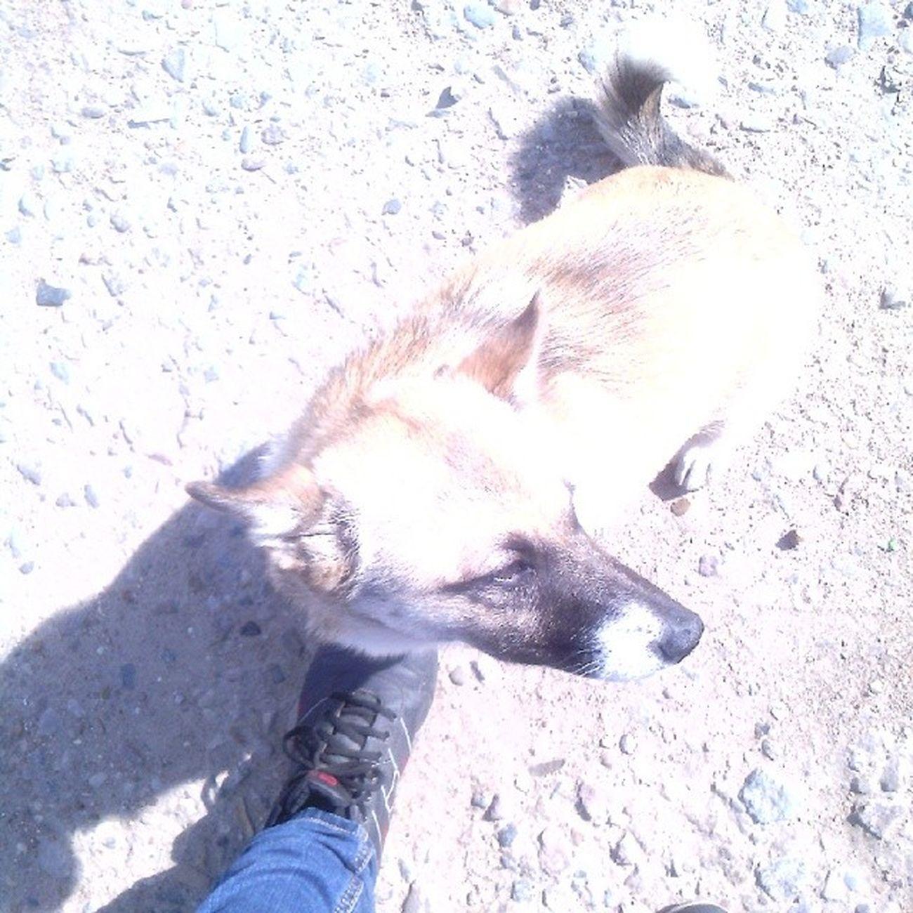 тимон щенок