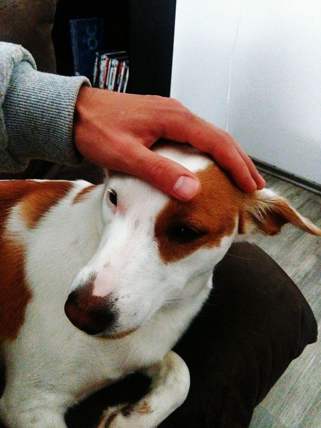 Check This Out Dog Tierwelt Best Friend Handyphoto