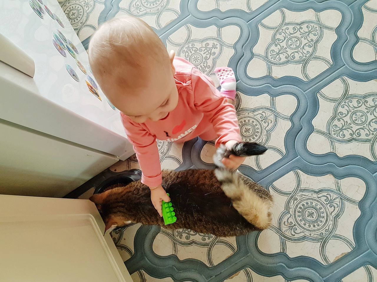 Baby Playing Childhood Indoors  Cat Exploring Baby&kidsphotography Baby Love  Baby Animals Nicecat Day Real People PhonePhotography Having Fun Animal Themes Toddler  Pet Portraits EyeEmNewHere Neon Life Domestic Life Kitchen Life Baby And Cat Cat Tail Kids Man And Pet Be. Ready.