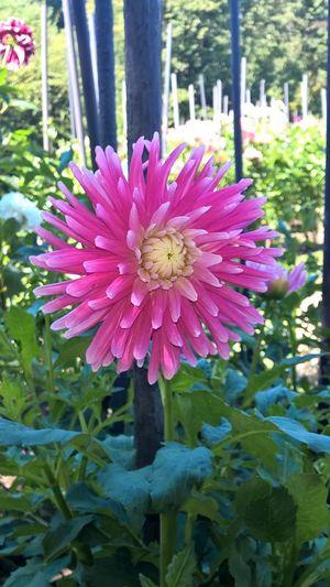Flower Petal Fragility Flower Head Freshness Nature Beauty In Nature