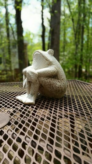 Frog Sitting Outside Selectivefocus