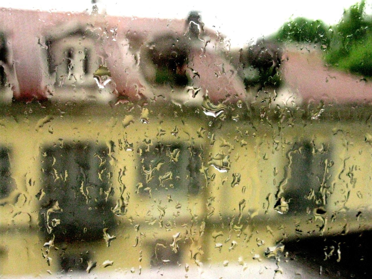 Close-up Day Drop Glass - Material Indoors  Rain Rooftop Sky Transparent Tree Water Wet Window
