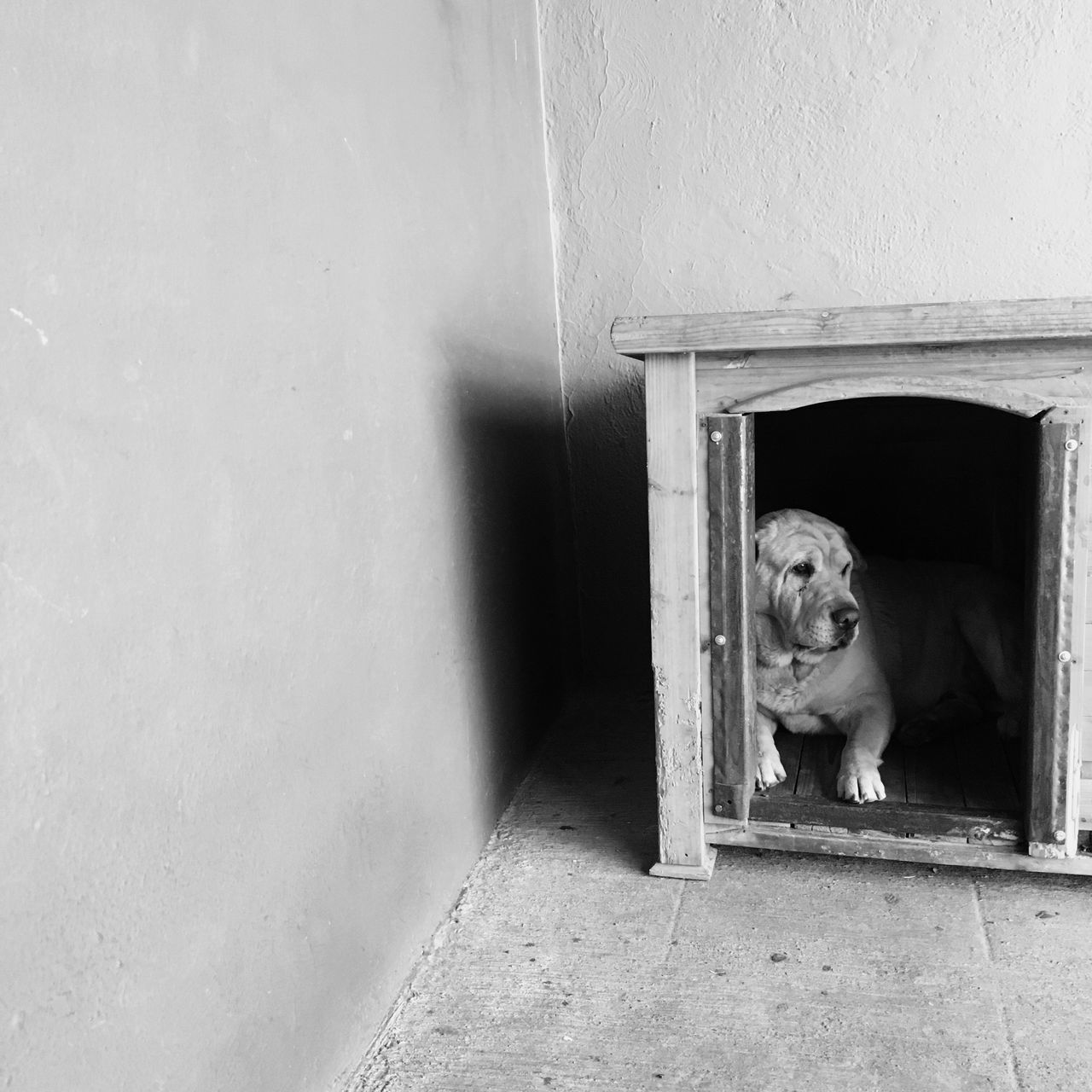 dog, one animal, door, entrance, pets, domestic animals, mammal, animal themes, built structure, doorway, architecture, no people, day, indoors, open door