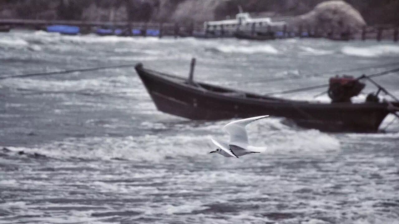nautical vessel, bird, transportation, animal themes, animals in the wild, nature, water, mode of transport, flying, no people, seagull, day, spread wings, outdoors, animal wildlife, sea, swan