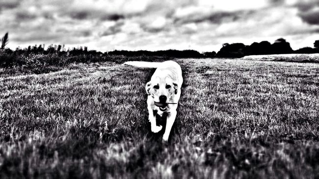 Dog here is dodo the dog in a field... Final