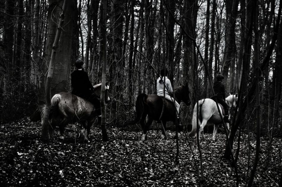 Riding Through The Woods Three Girls On Horseback Pony Horse Bare Trees Cold Days Leaves On The Ground No Sunshine Trees Cityforest Forest View Nature Beauty In Nature Animal Themes Outdoors Scenics Day Black And White Beliebte Fotos Frankfurt Am Main Germany🇩🇪
