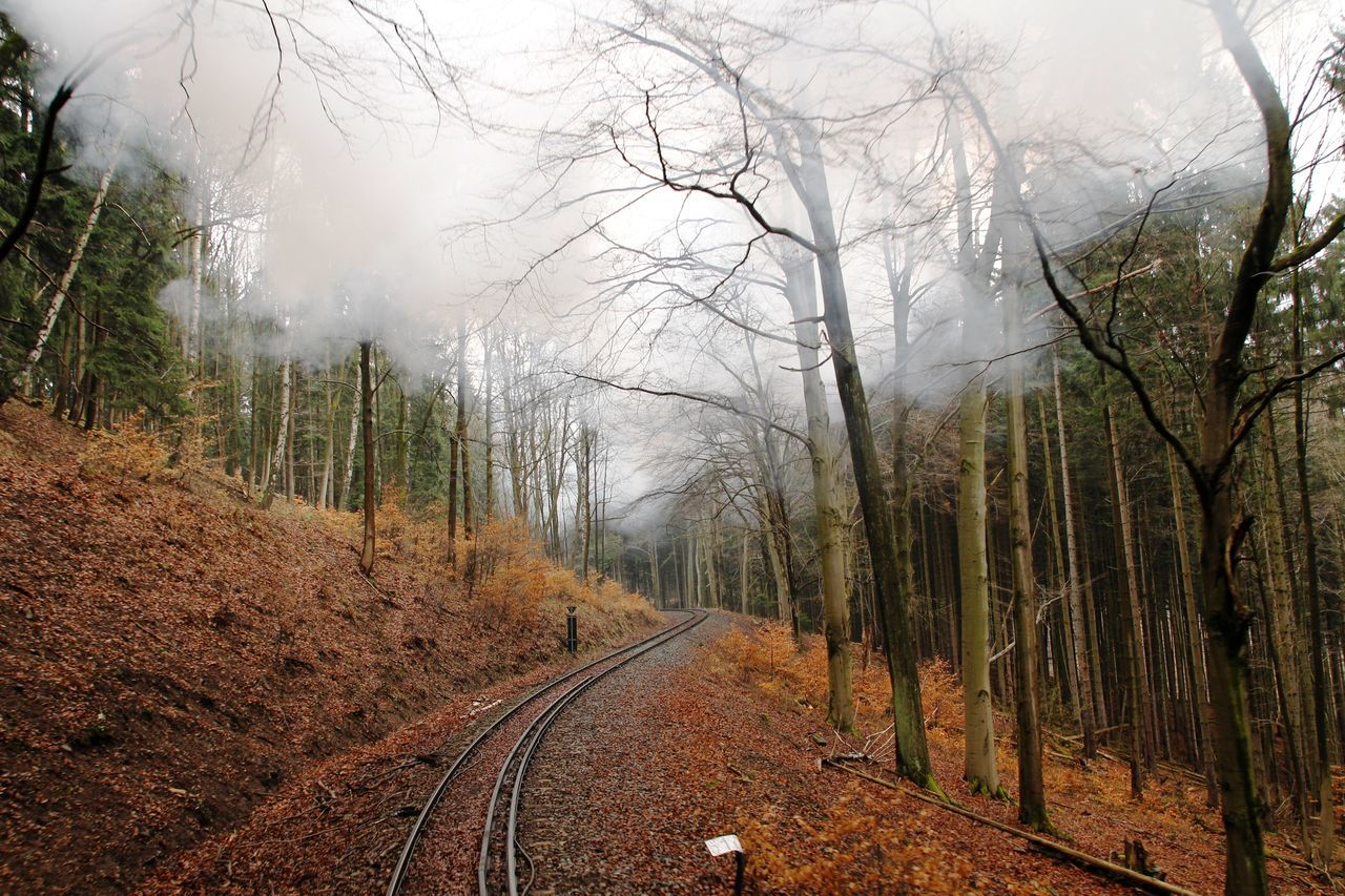 Beauty In Nature Brocken Brockenbahn Colorful Day Fog Forest Harz Look Back Narrow-gauge Railway Nature No People Outdoors Rails Road Sky Steam Steam Train The Way Forward Tracks Tranquility Transportation Tree Trees Uphill
