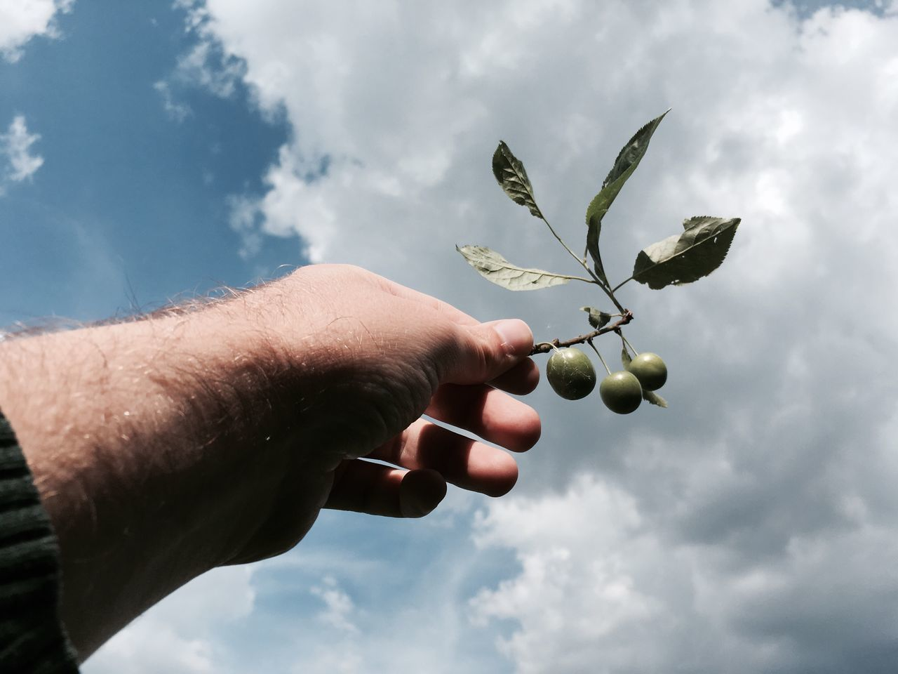 Human Hand Sky Cloud - Sky Human Body Part Holding Nature Outdoors One Person Leaf Day Close-up Growth Real People Tree Branch Beauty In Nature Freshness People