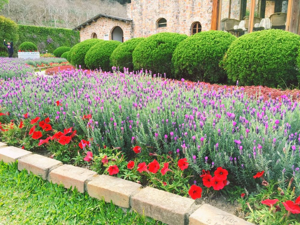 Romantic Getaway Taking A Break Relaxing Street Photography Flowers Flower Collection Violet