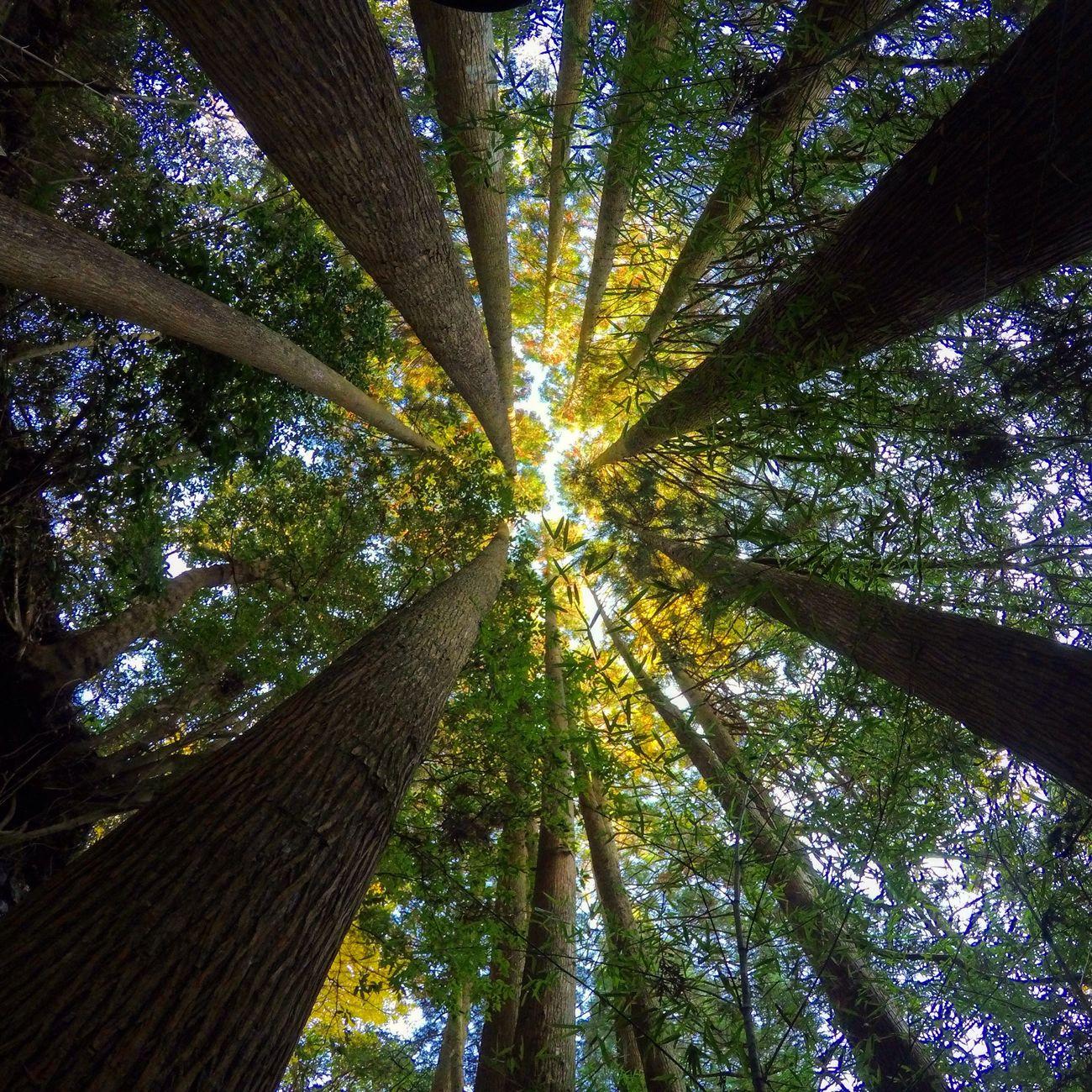 Forest walk😬