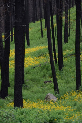 After A Fire Beauty In Nature Flower Landscape Methow Valley Nature Outdoors Pipestone Canyon Scenics Tree Tree Trunk Wildfire
