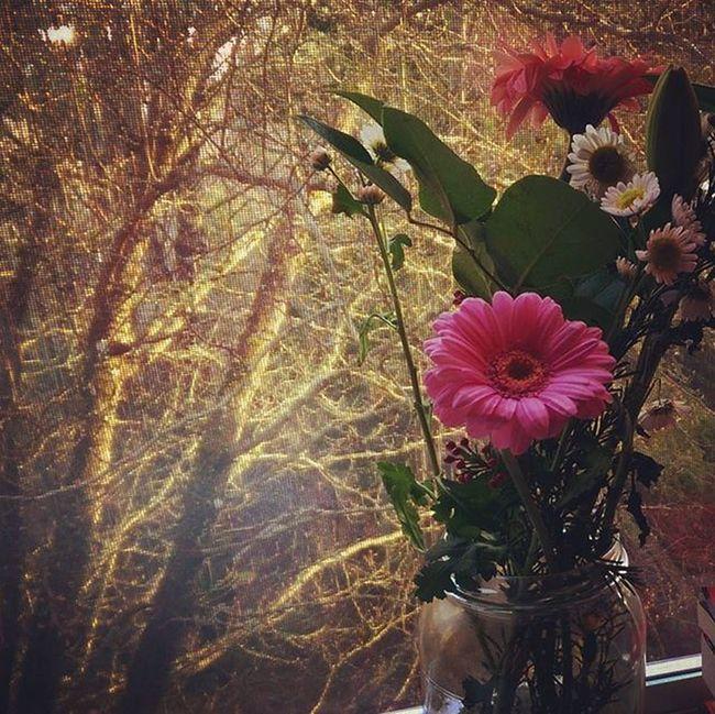 Flowerobsession Flowerobsessed February Screenwindow Pinkgerbera Beauty