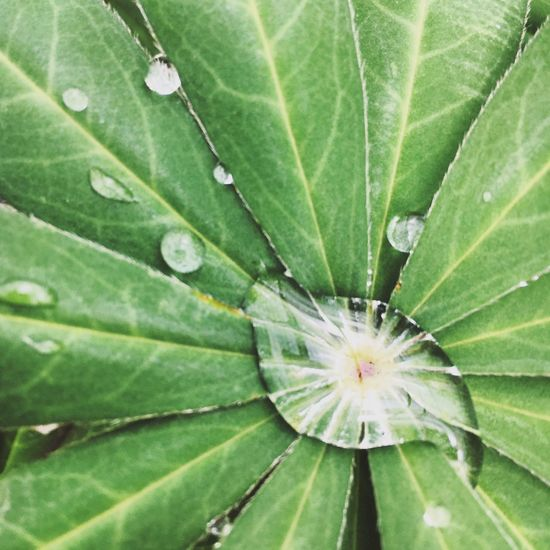 Rain Raindrops Nature Photography Nature Macro ColorPalette Color Palette Eyeemphoto Eyeemphotography EyeEm Best Shots EyeEmBestPics