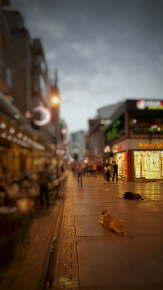 Streetphotography Streetdogs Izmir Alsancak Kordon Night The Street Photographer - 2016 EyeEm Awards Blurred Background Focus