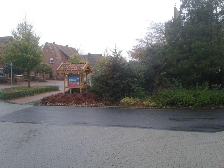 Grau in grau in Erika, Ortsteil von Haren_Ems