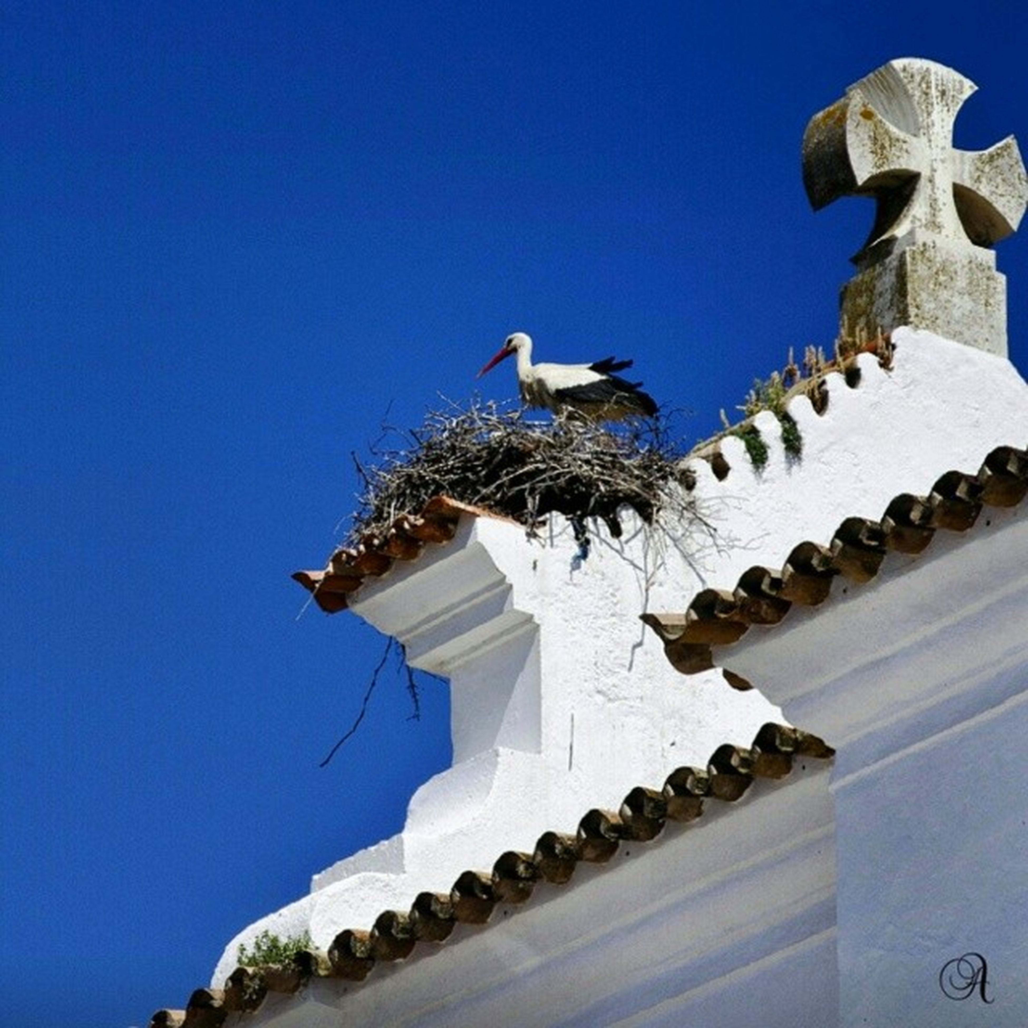 bird, animal themes, clear sky, blue, animals in the wild, low angle view, architecture, built structure, wildlife, building exterior, flying, copy space, seagull, roof, one animal, day, perching, pigeon, flock of birds