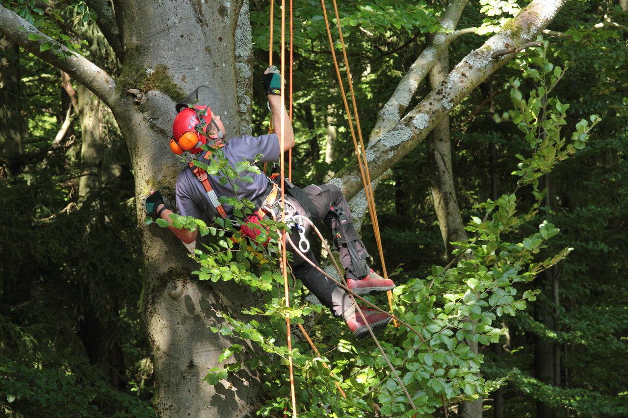 Seilklettertechnik Baumpflege Skt Baumklettern Treeclimbing