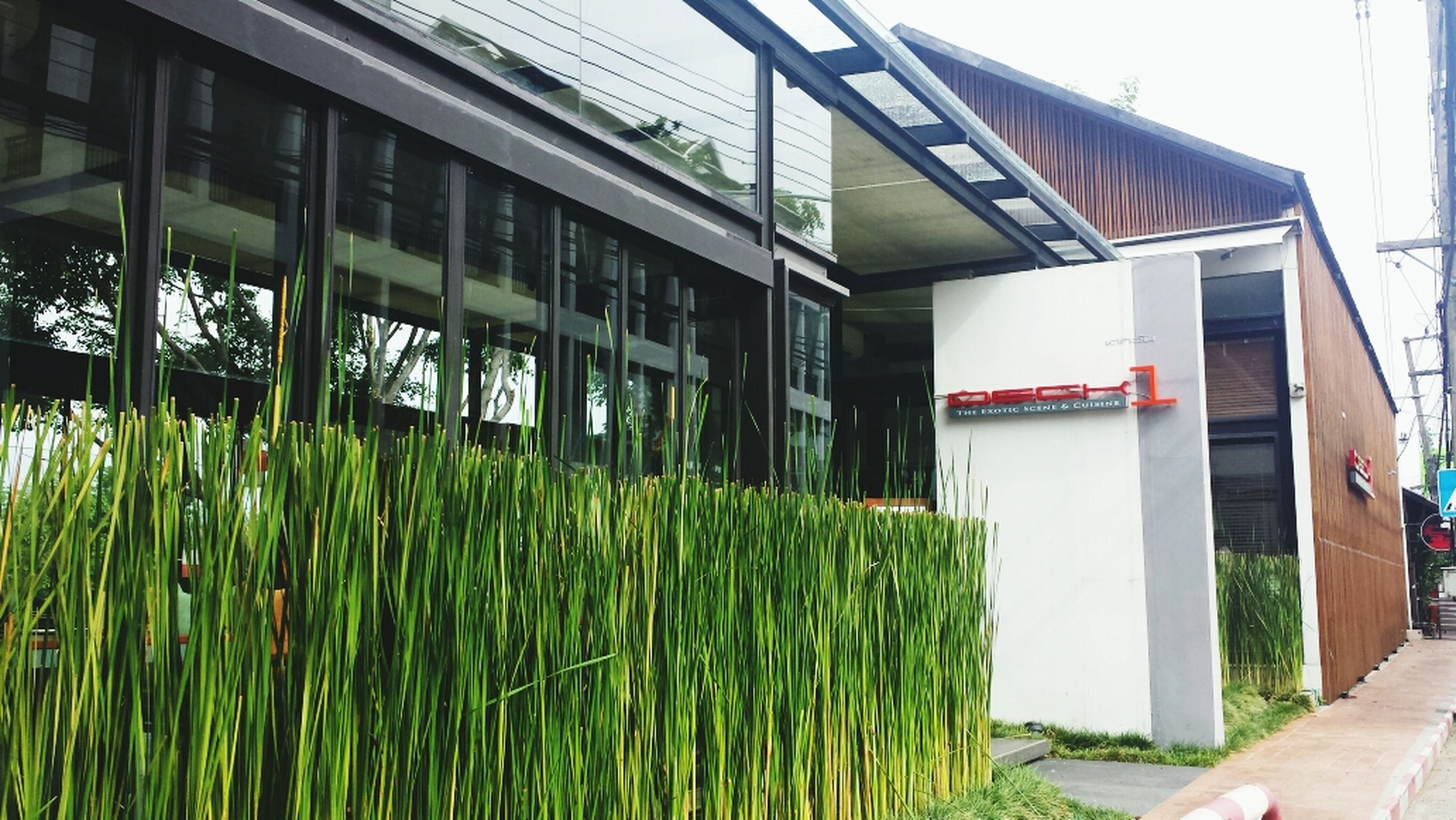 building exterior, architecture, built structure, green color, grass, window, plant, house, growth, day, in a row, outdoors, no people, sky, building, green, wood - material, sunlight, residential structure, residential building