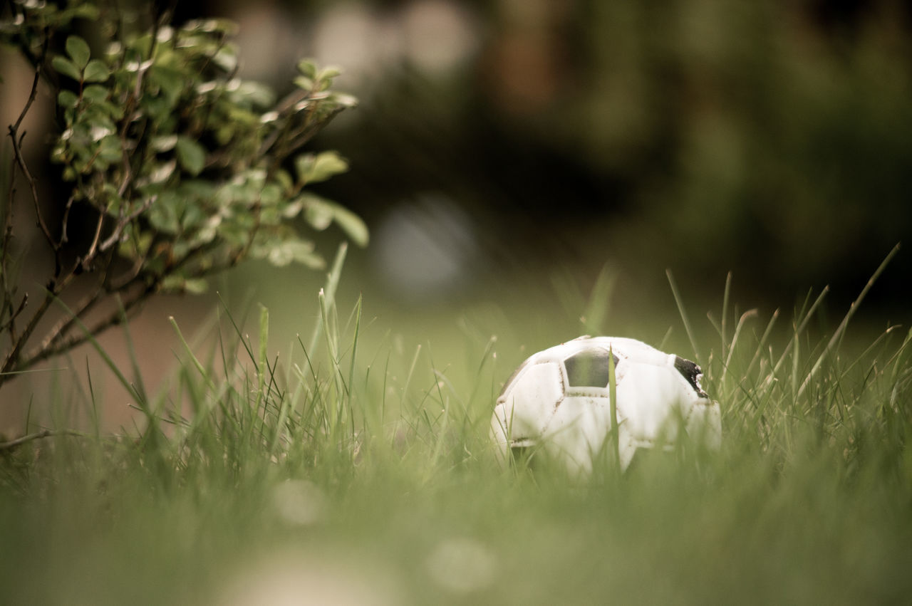 Ball Close-up Day Football Garden Grass Green Color Growth Nature No People Outdoors Selective Focus