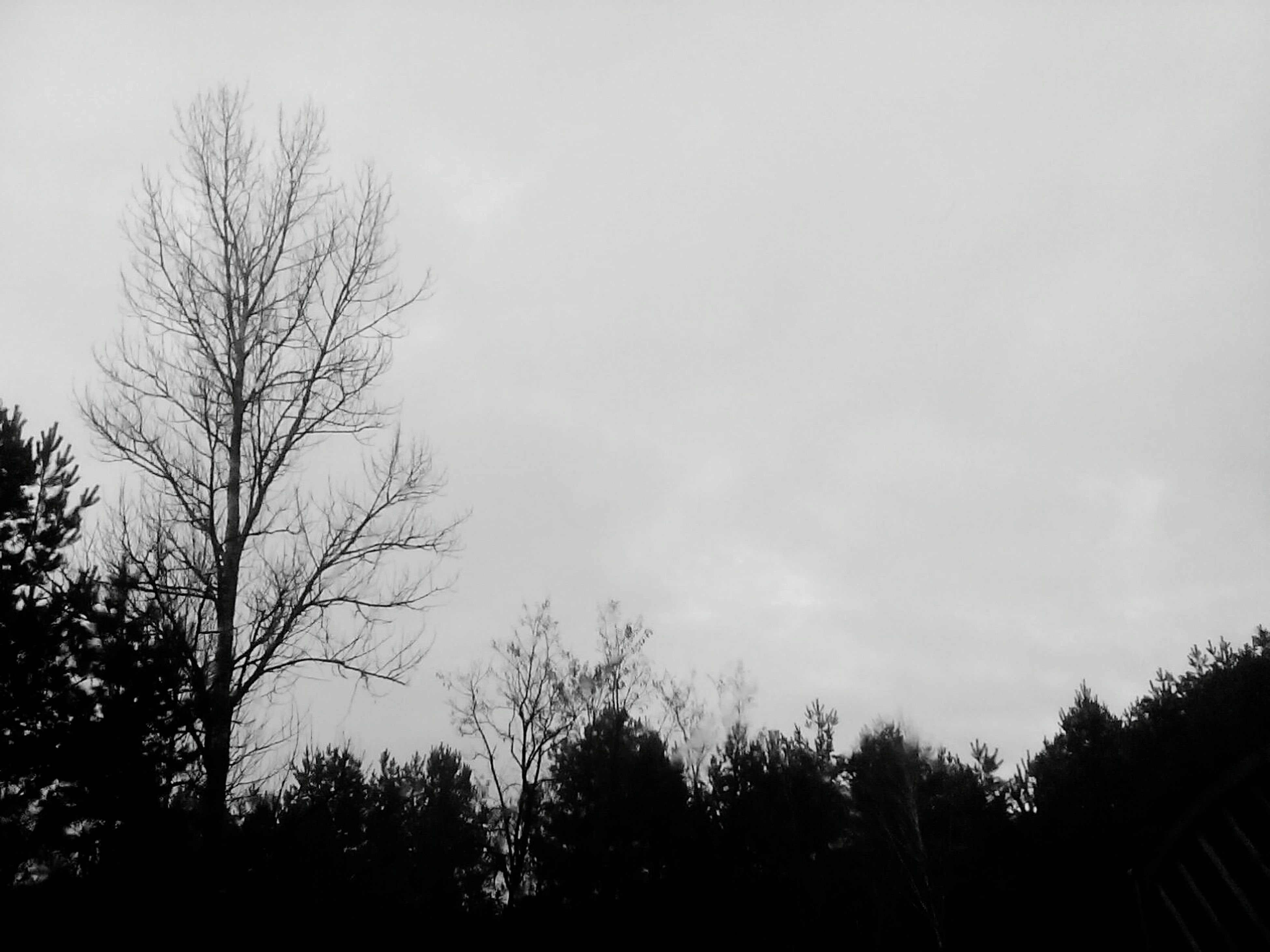 tree, silhouette, bare tree, sky, low angle view, tranquility, branch, tranquil scene, beauty in nature, nature, scenics, growth, dusk, copy space, clear sky, outdoors, no people, high section, day, non urban scene