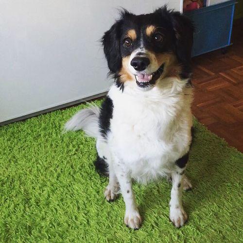 My boy ❤️ Dog Ilovemydog Pets Cute Pets DogLove I Love My Dog My Dog Pets Corner Dogs Dog Love