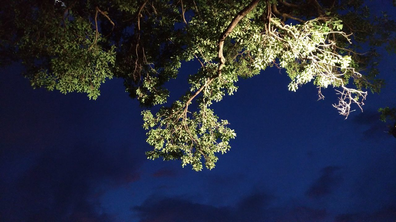 tree, nature, night, no people, beauty in nature, blue, branch, outdoors, illuminated, close-up, sky