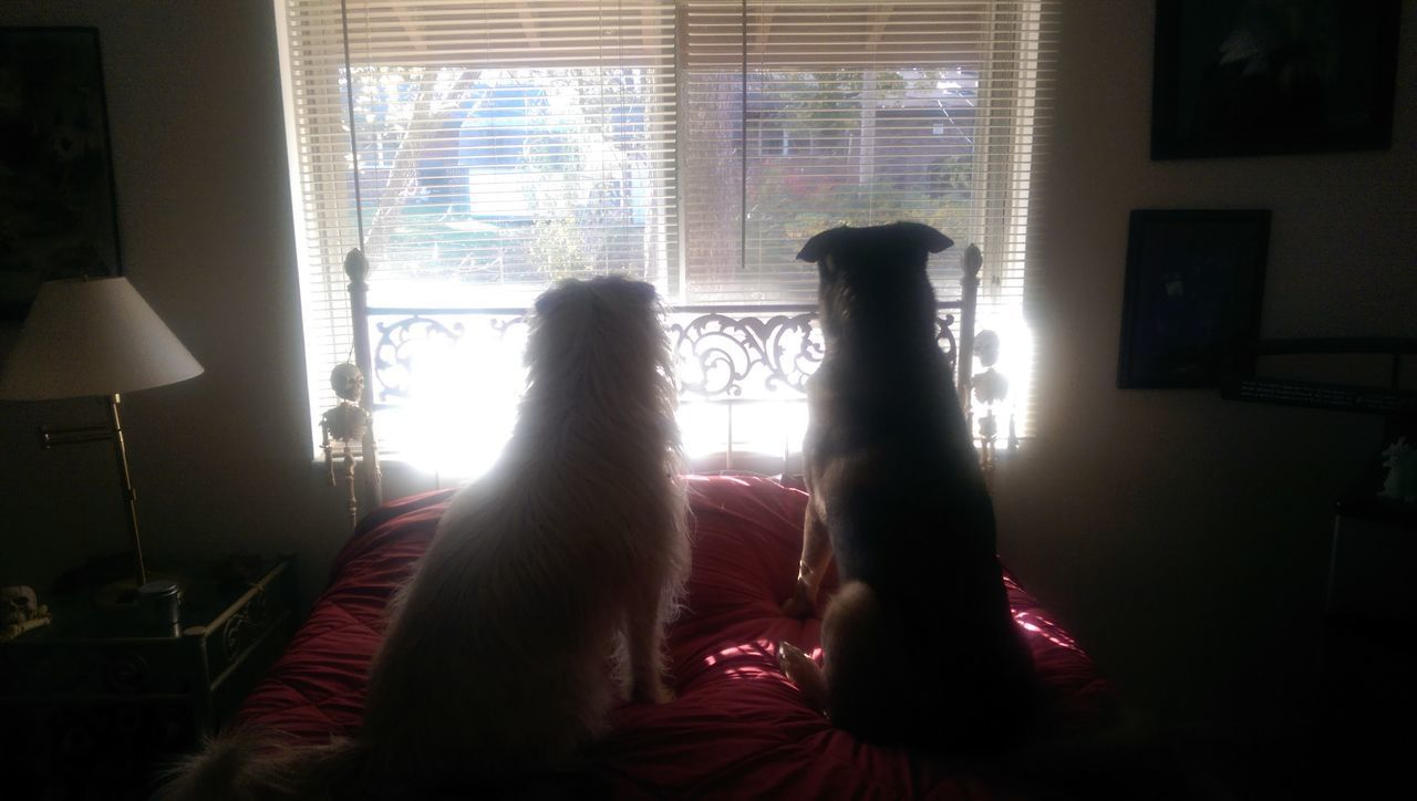 The Purist Flashback 2015 The K9GB Birdwatching We Are Nature Sunlight And Shadow The Ghost And The DarknessMy Dogs Are Cooler Than Your Kids Best Friends Family Matters