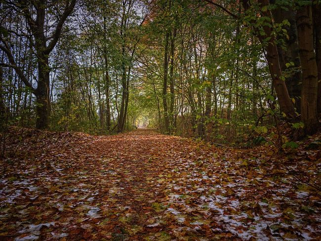 Early morning at Brabrand Sø Nature Tree Forest Tranquility Beauty In Nature Outdoors Scenics No People Tranquil Scene Autumn Leaf Growth Day Landscape Water Misty Morning Pathway Path In Nature Forest Forest Path Leaves Brabrand Sø årslev Engsø Denmark