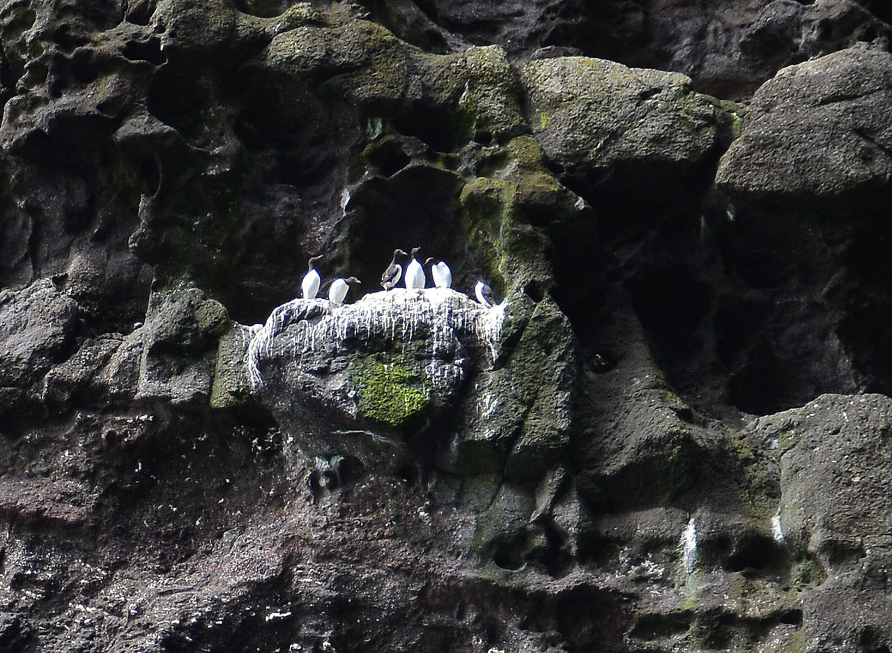 Birds Nesting In Cliffs - Tórshavn Beauty In Nature Cave Cliff Day Faroe Islands Long Exposure Motion Nature No People Outdoors Physical Geography Power In Nature Rock - Object Rock Formation Scenics Tórshavn Water Waterfall Perspectives On Nature
