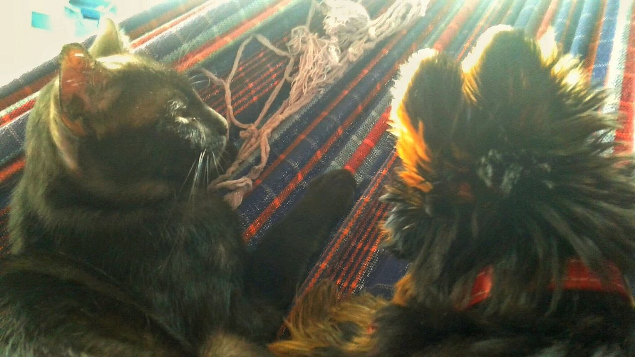 Curtindo a tarde na rede <3 Check This Out Taking Photos Relaxing Hi! Cat EyeEm Best Shots Open Edit Beautiful Day Glitch Hello World Pet Dog Sun Rede No Filter Yorkshire I Love My Dog Cute Doglover Yorkshire Terrier Black Cat Dog❤ Enjoying Life Hammock